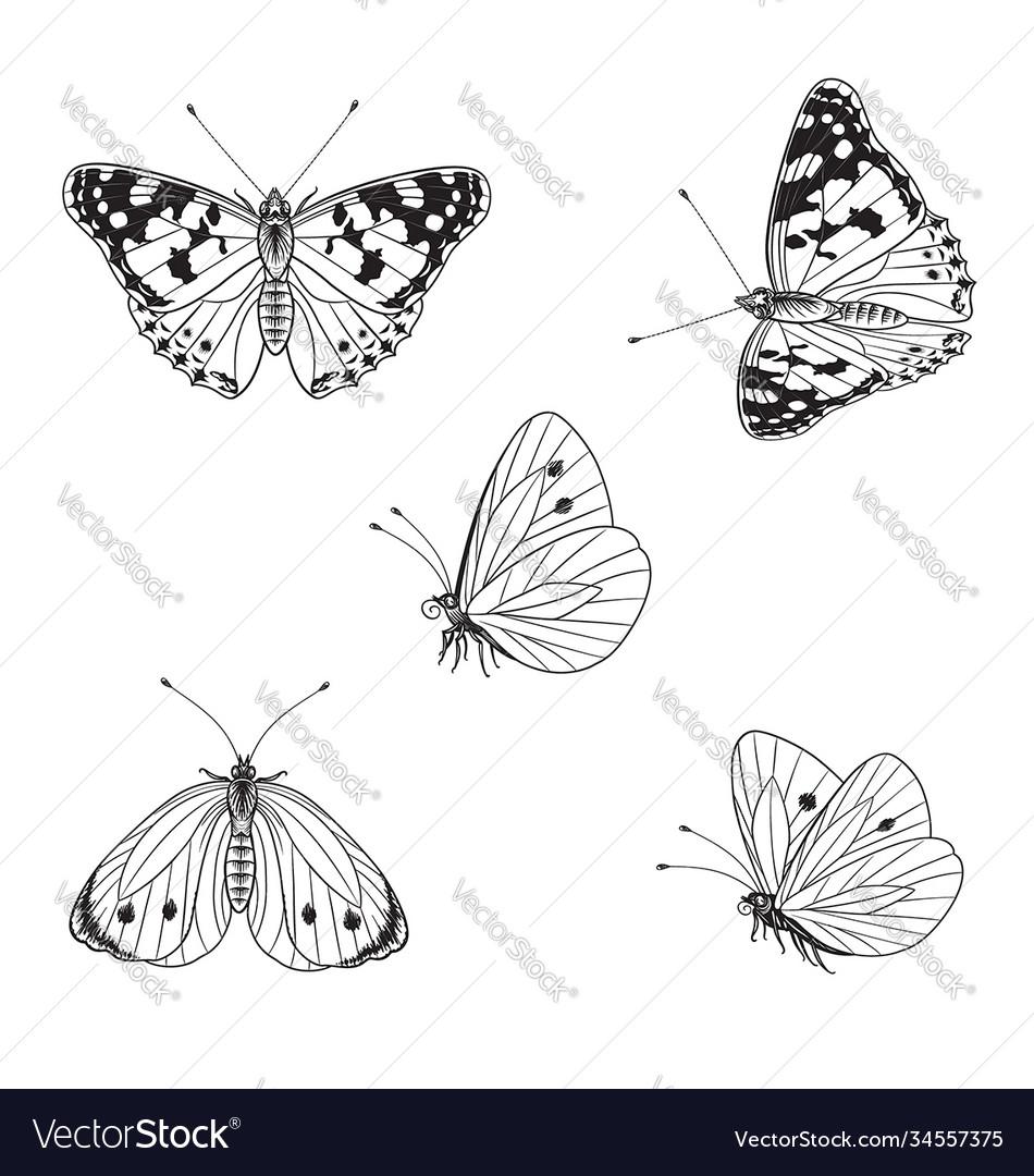 Butterflies set in monochrome line graphic