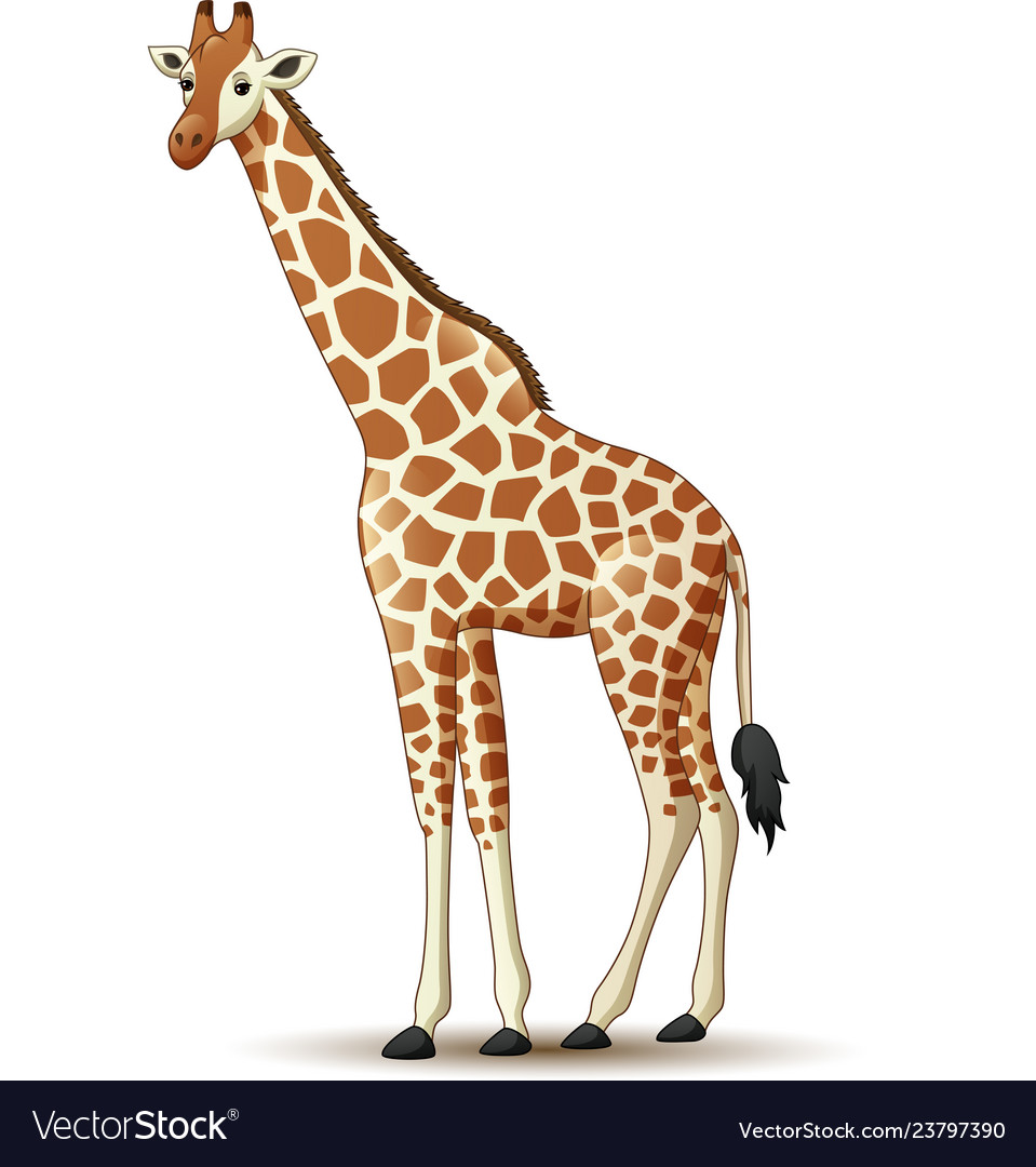 d0ab805f8 Cartoon giraffe isolated on white background Vector Image