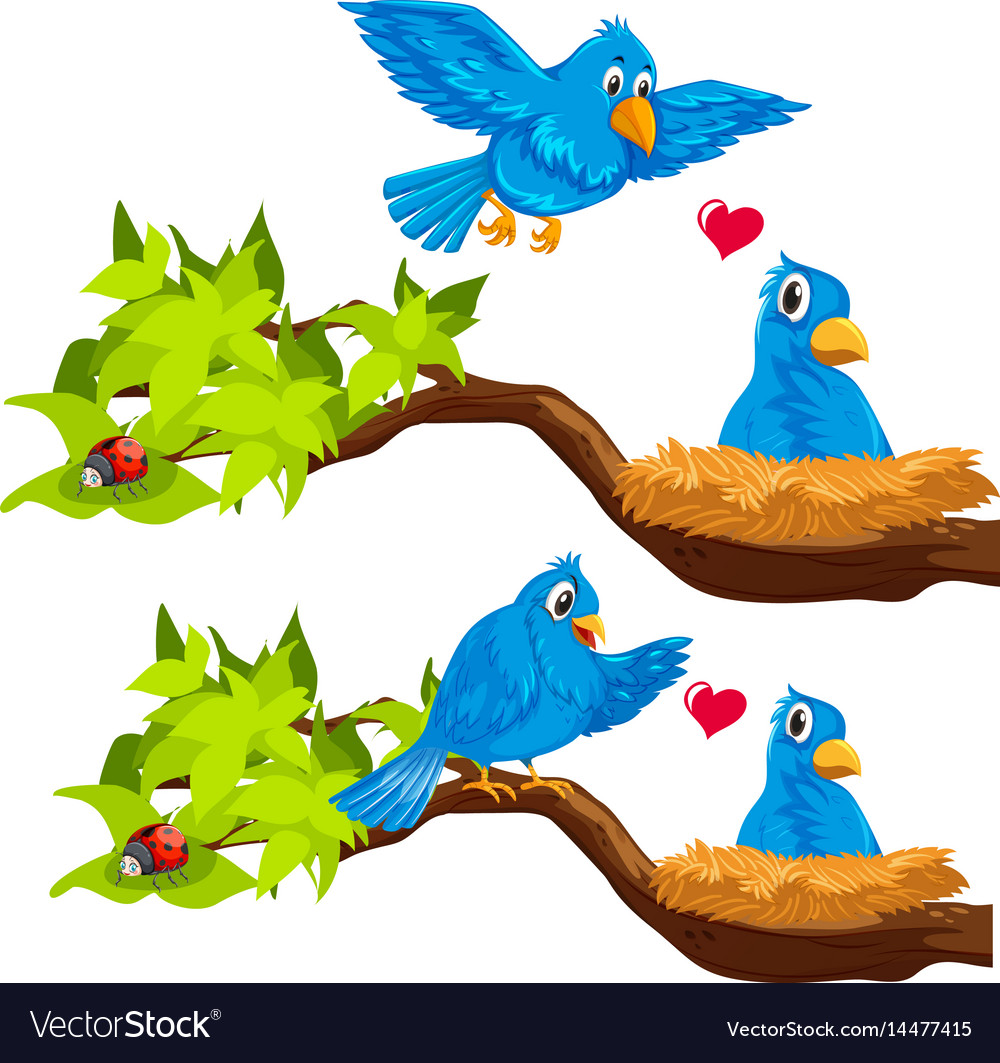 Blue birds in the nest