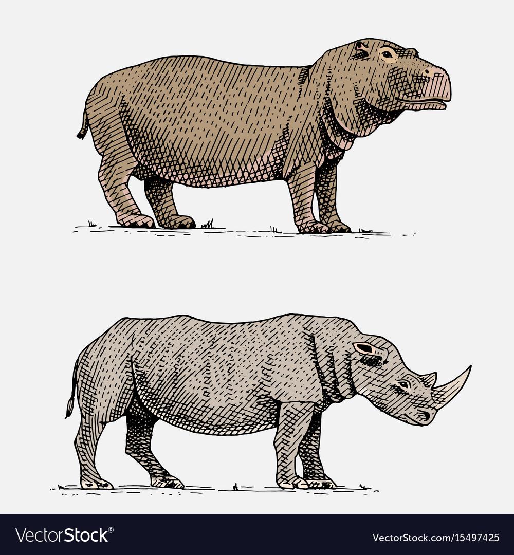 Hippopotamus and black or white rhinoceros hand