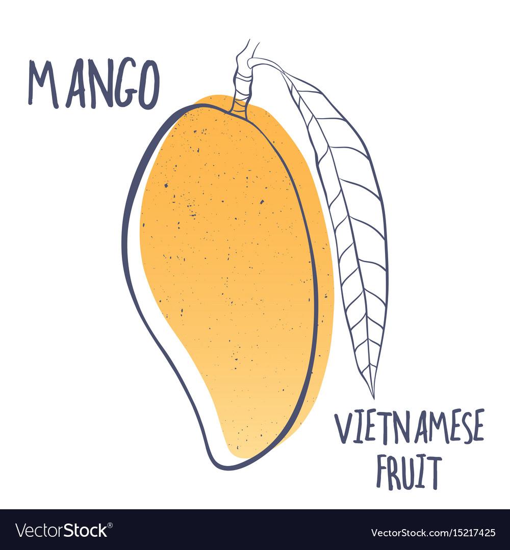 Mango icon of vietnamese fruit vector image