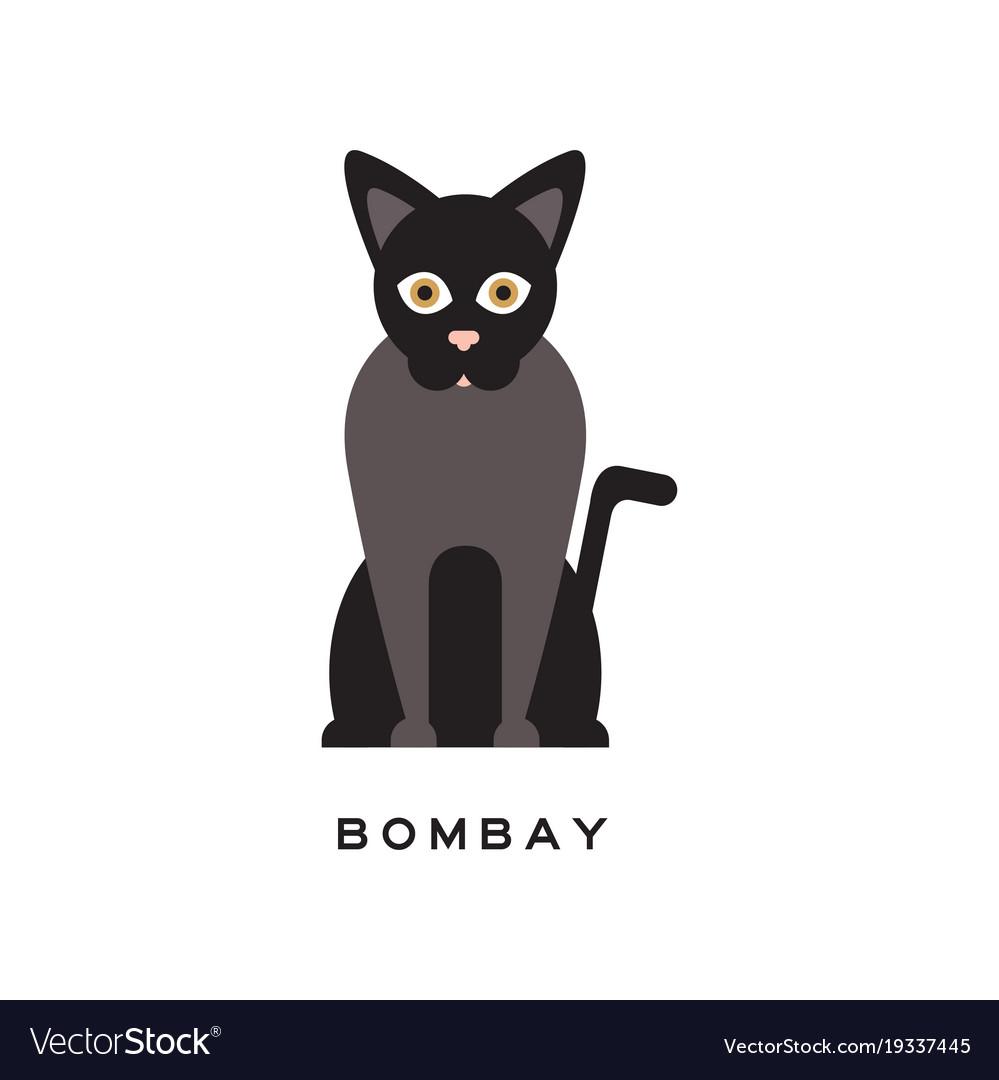 Elegant bombay cat type of short-haired feline vector image
