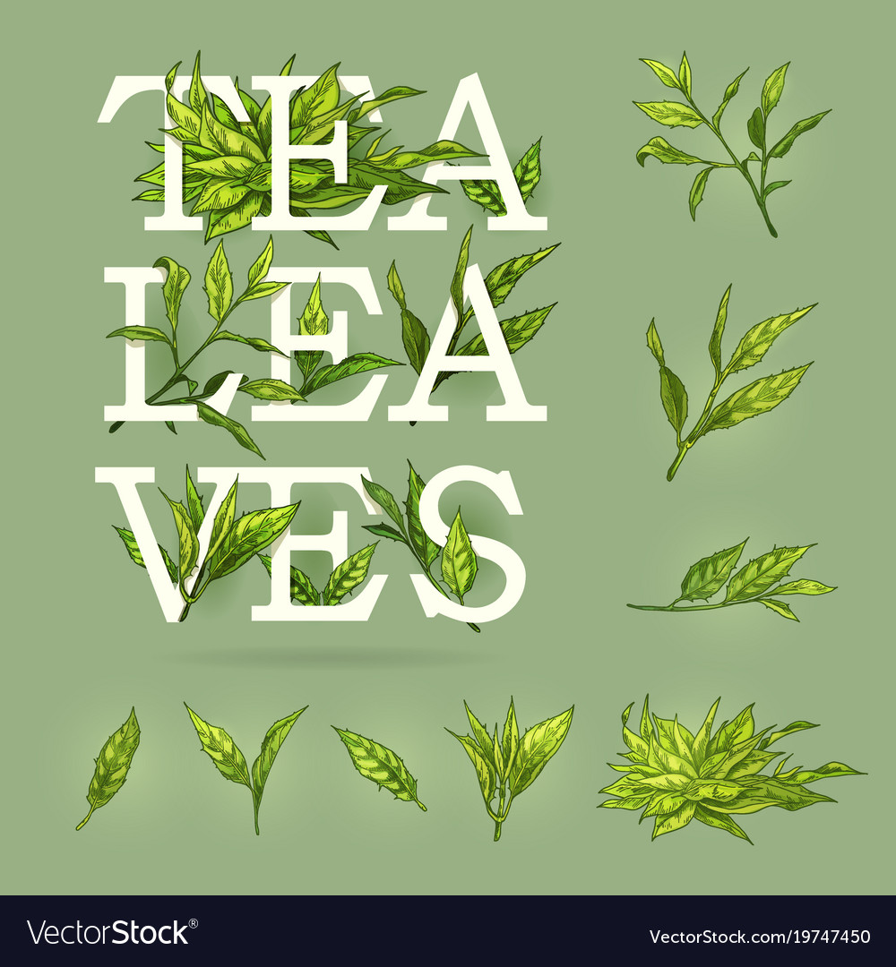 Colourful banner of tea with leaves elements and