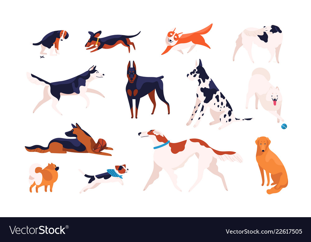 Collection adorable dogs different breeds