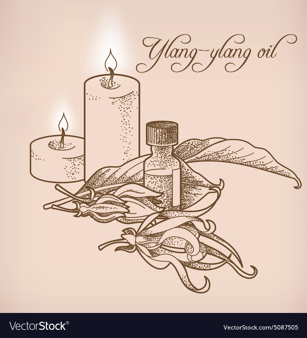 Ylang-ylang essential oil and candles vector image