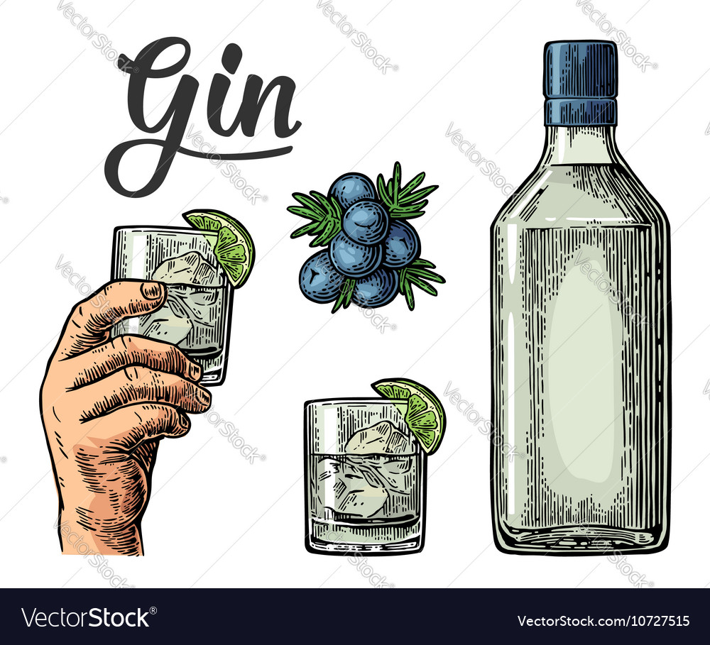 Glass and bottle of gin and branch of Juniper with vector image