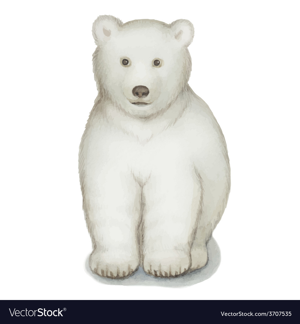 Polar bear watercolor Isolated on a white backgro vector image