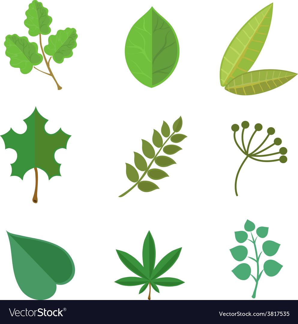 Various green leaves set