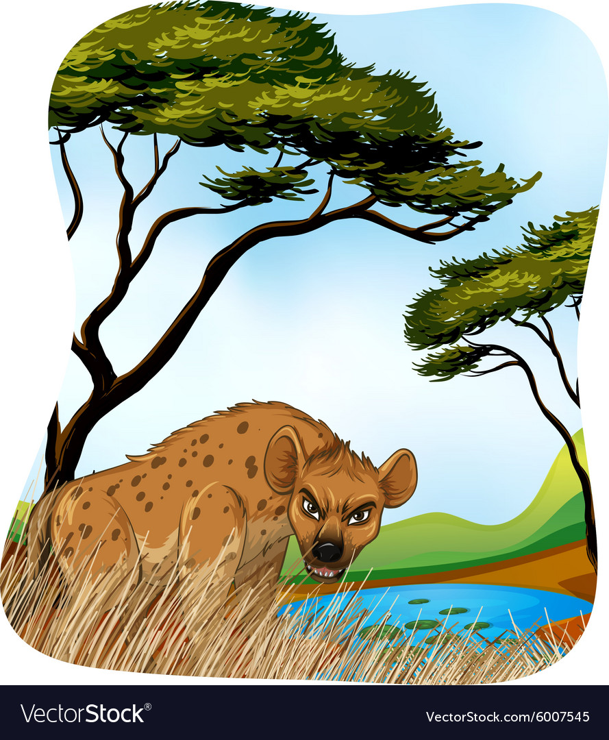 Brown hyena in nature