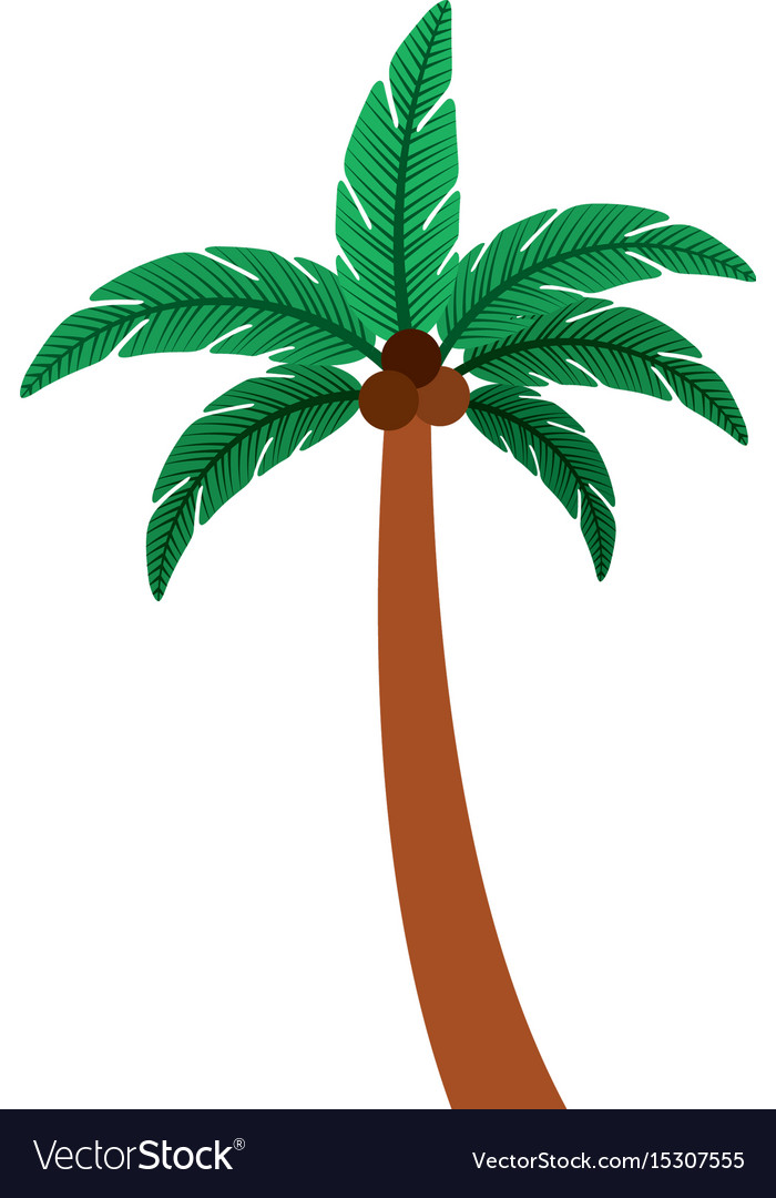 Tree palm summer icon vector image