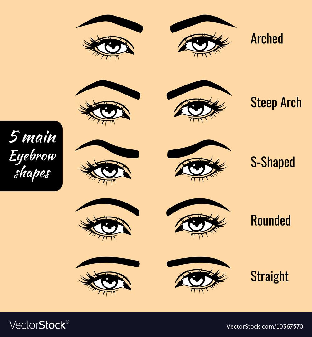 Basic Eyebrow Shape Types Royalty Free Vector Image