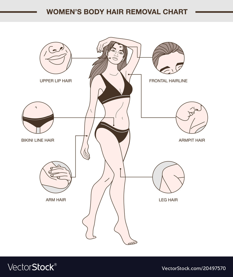 Infographic With Womens Body Hair Removal Chart Vector Image