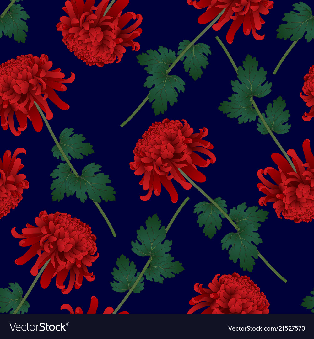 Red Chrysanthemum Flower On Navy Blue Background Vector Image