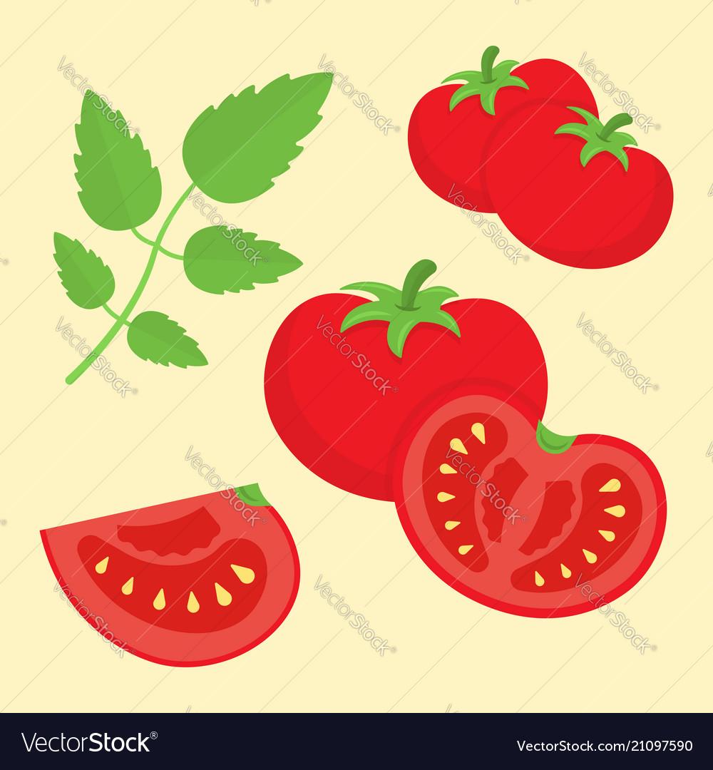 Cartoon flat style tomatoes