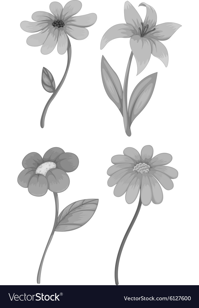 Four different kind of flowers royalty free vector image four different kind of flowers vector image mightylinksfo