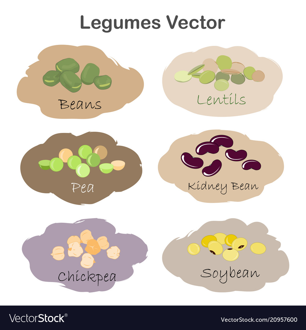 Set of different cartoon legumes labels isolated