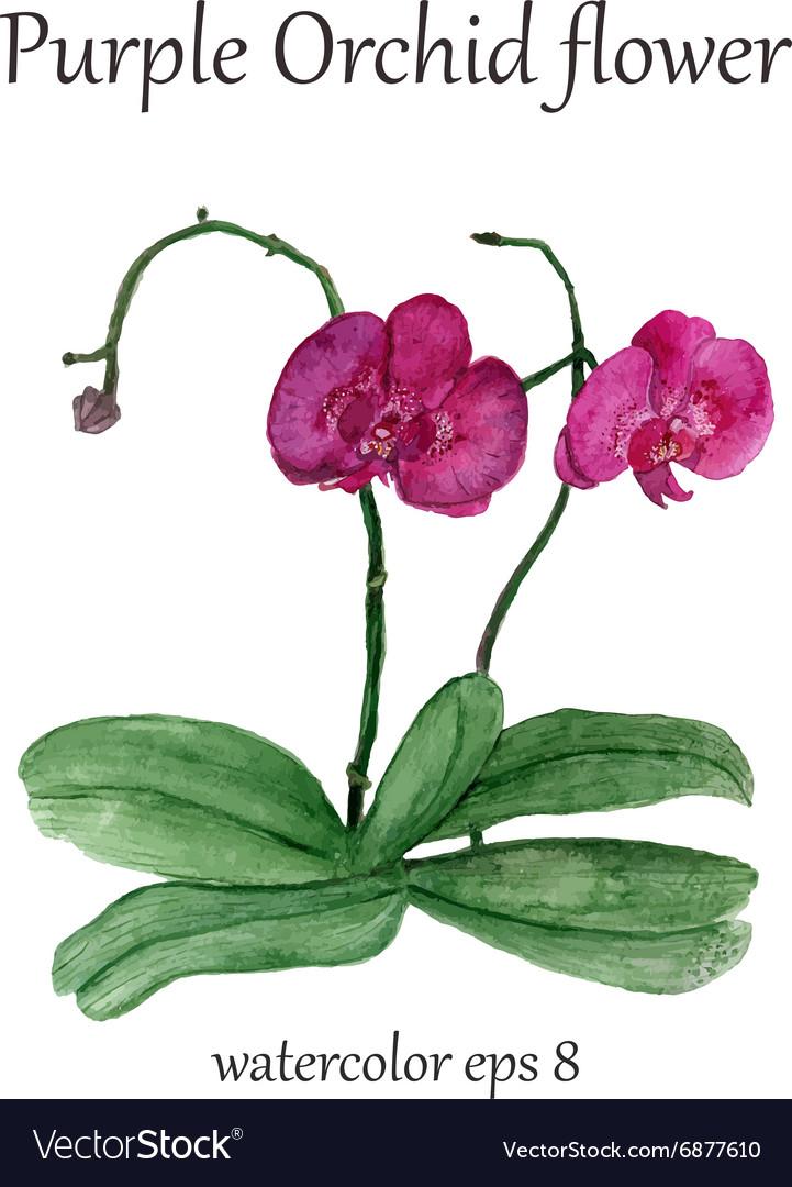 Purple orchid watercolor flower