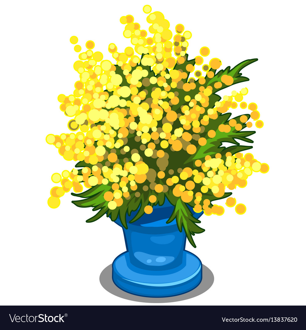 Bouquet of yellow mimosa in blue vase