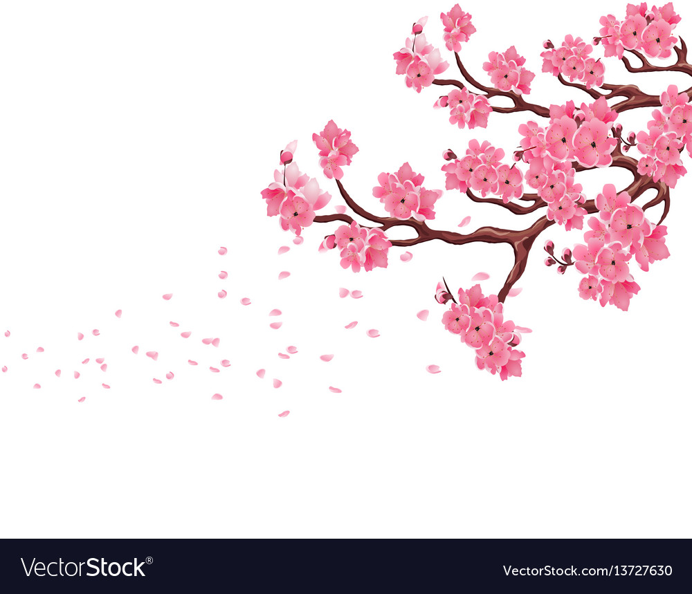 Branches with pink cherry blossoms sakura the