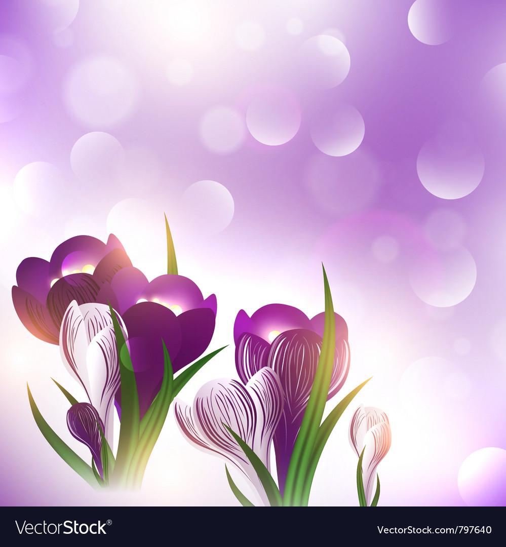 Crocus flower over bright background vector image