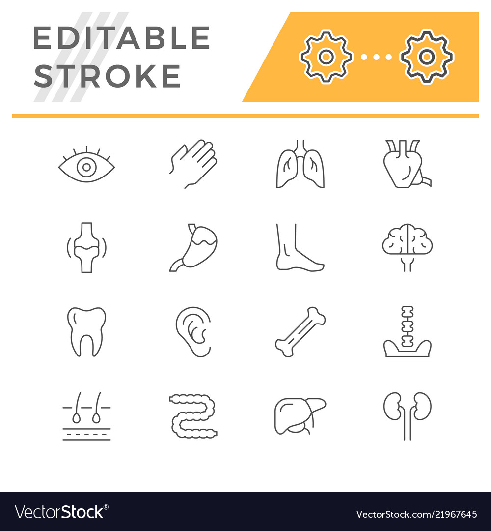 Set line icons human organs vector