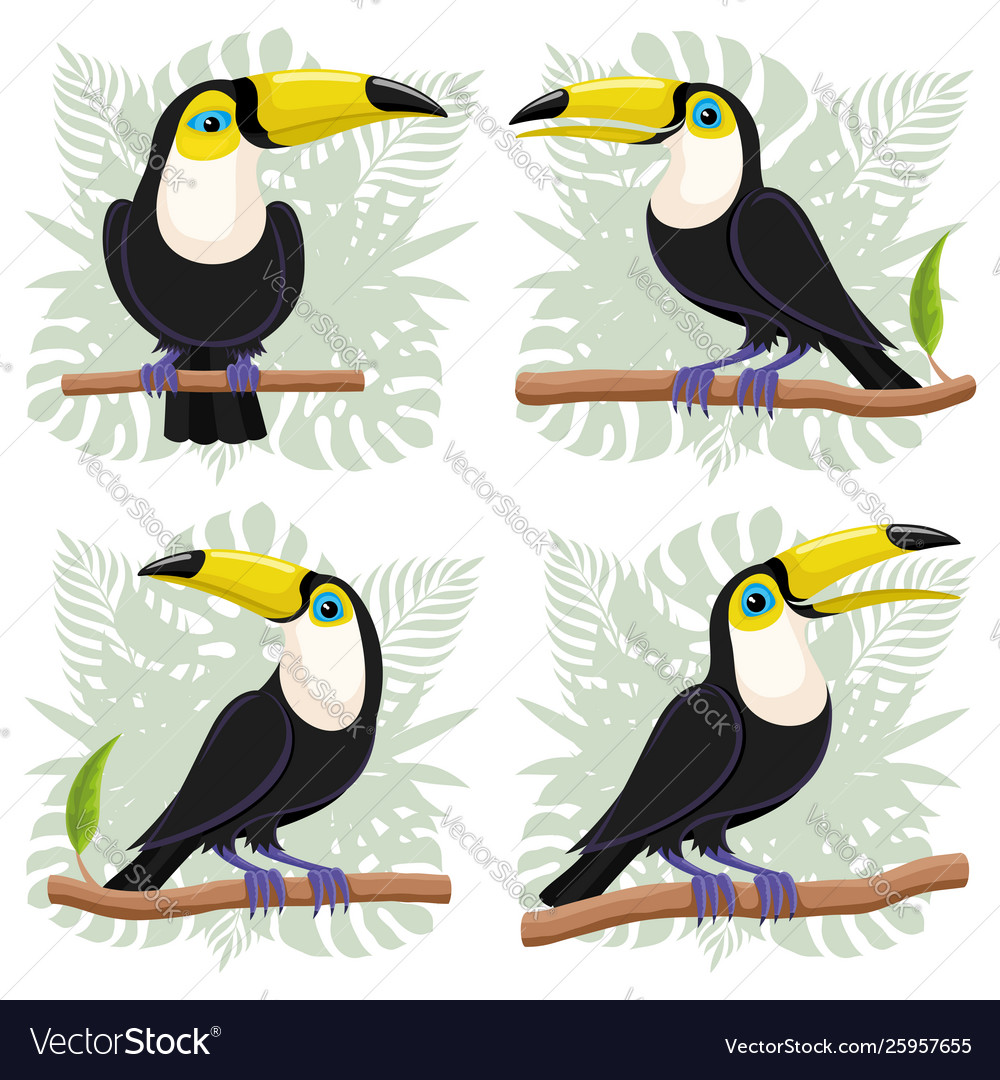 Toucans birds on branches