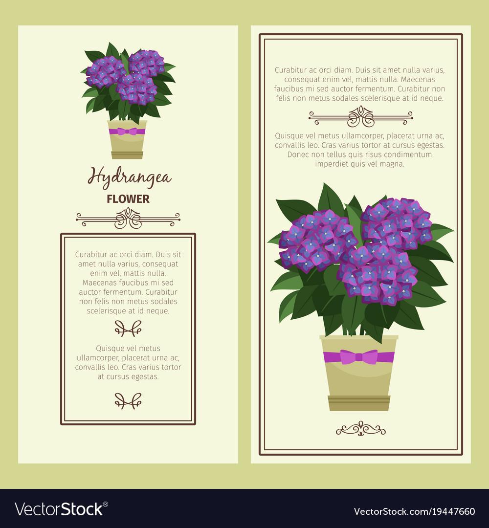 Hydrangea flower in pot banners