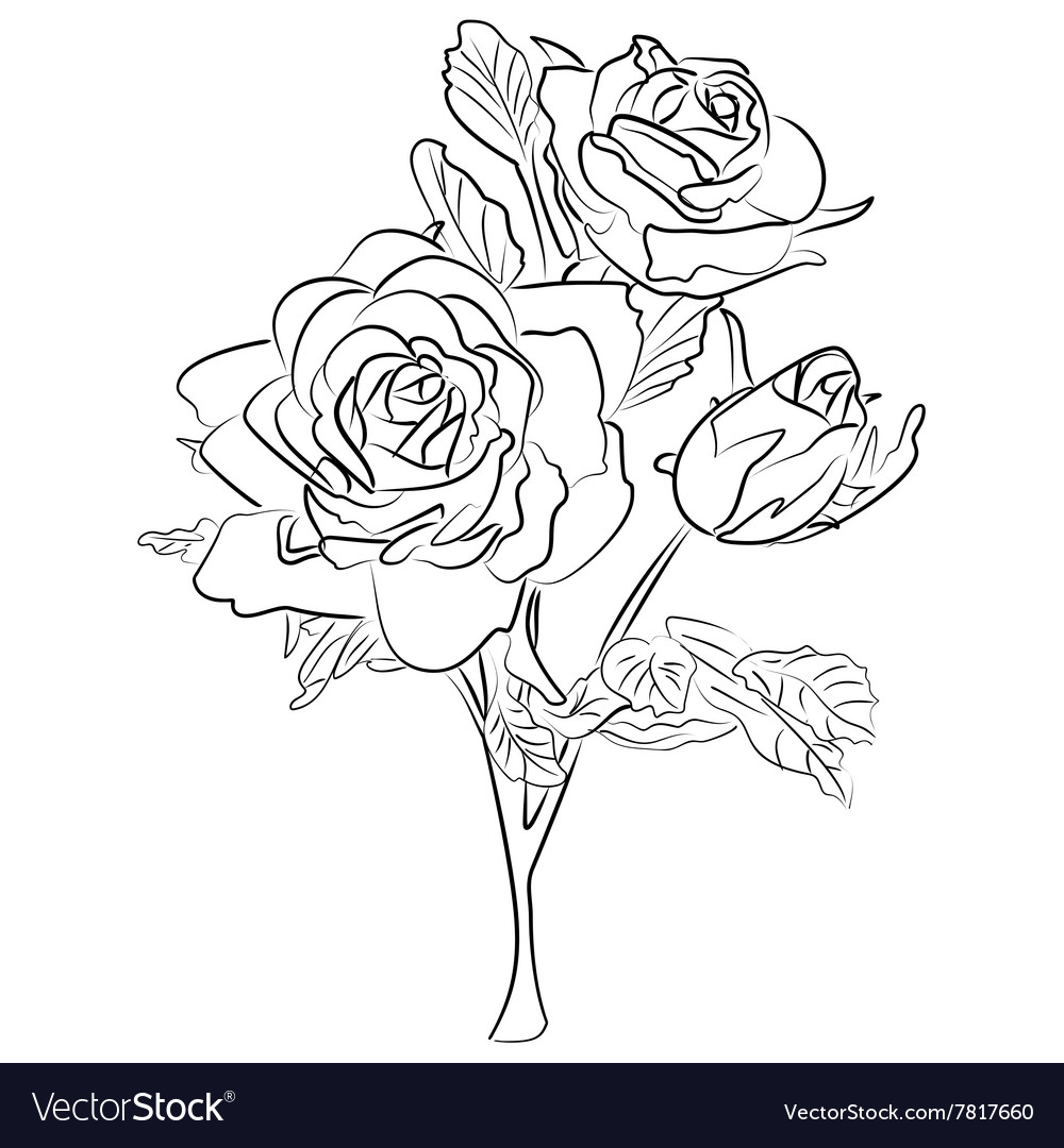 Sketch black and white rose vector image