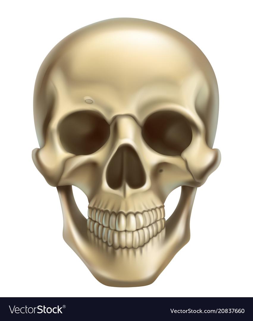 Skull 3d realistic icon