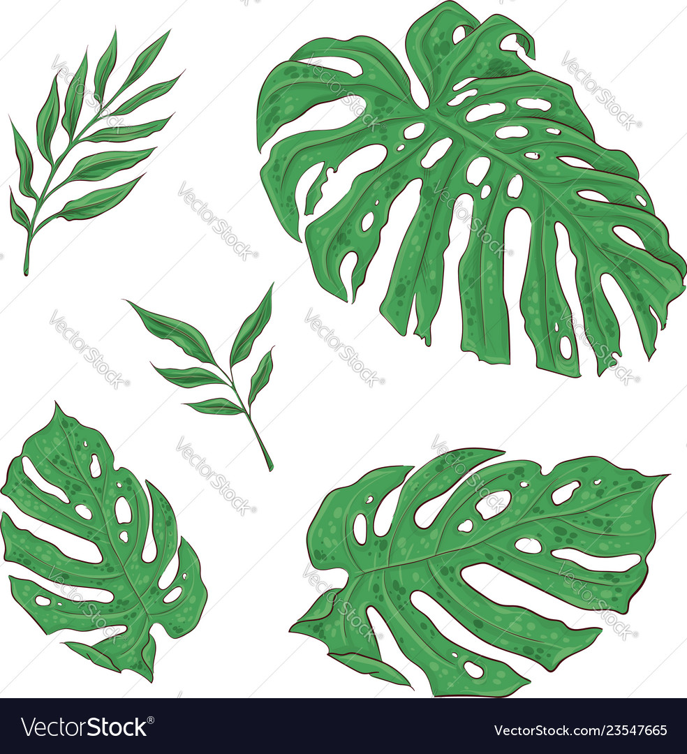 Bright set of green tropical leaves