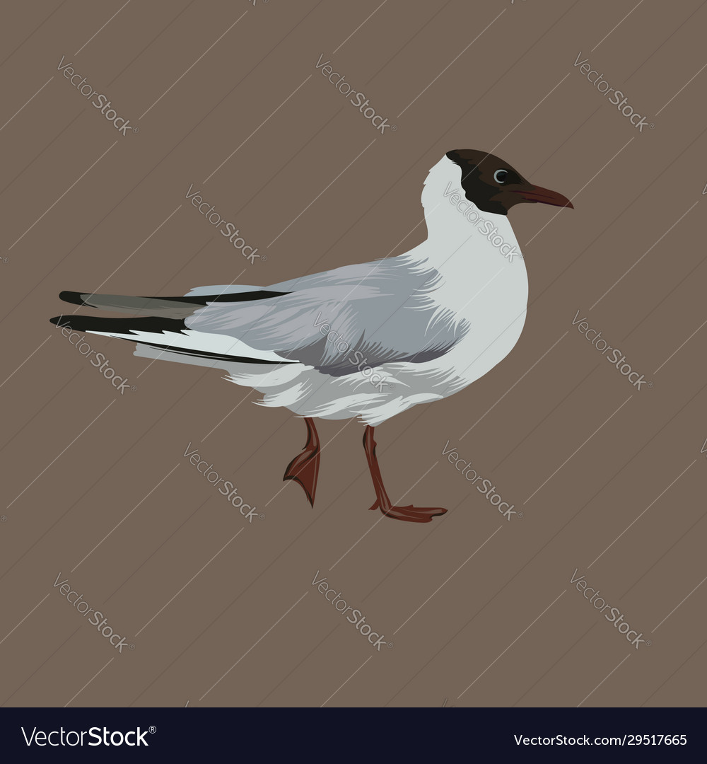 Hand drawn seagull isolated