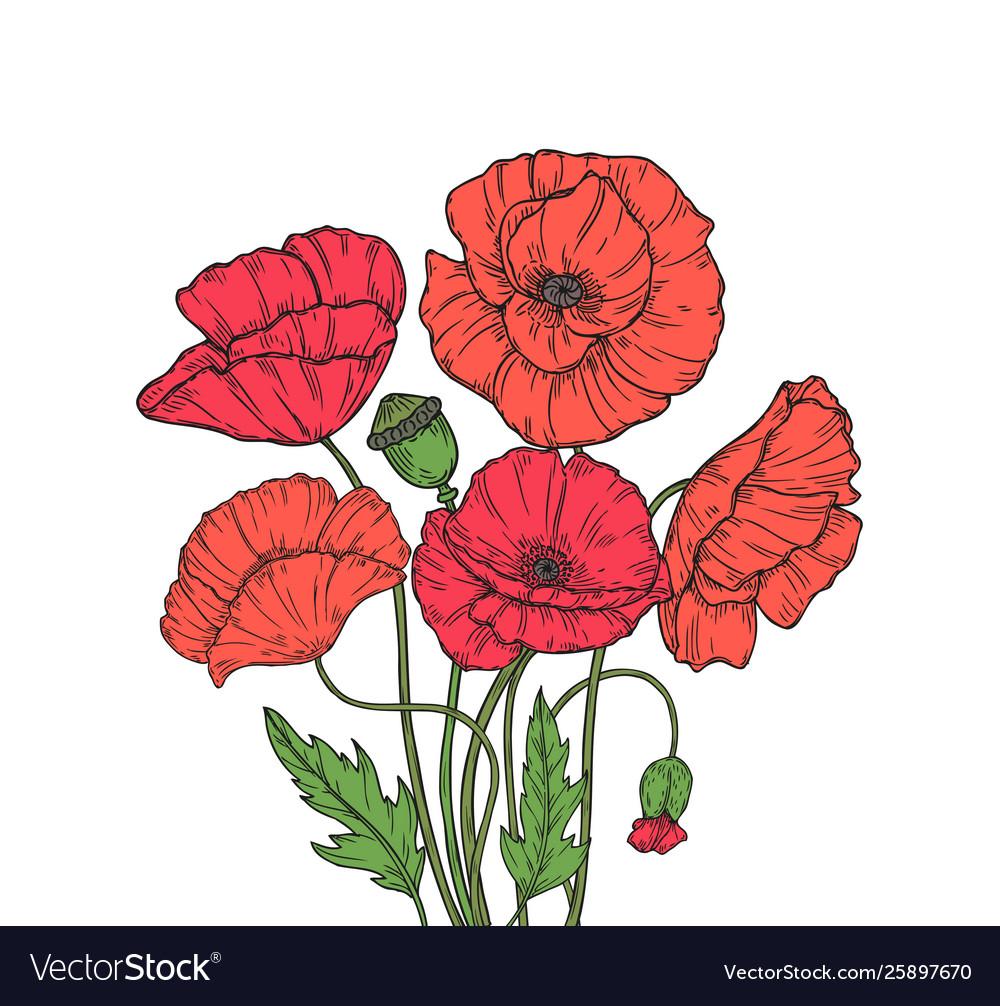 Poppy bouquet red poppies flower meadow garden
