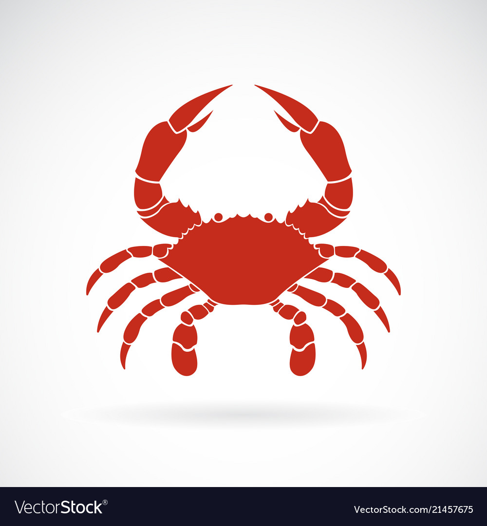A crab on white background animals crab icon sea