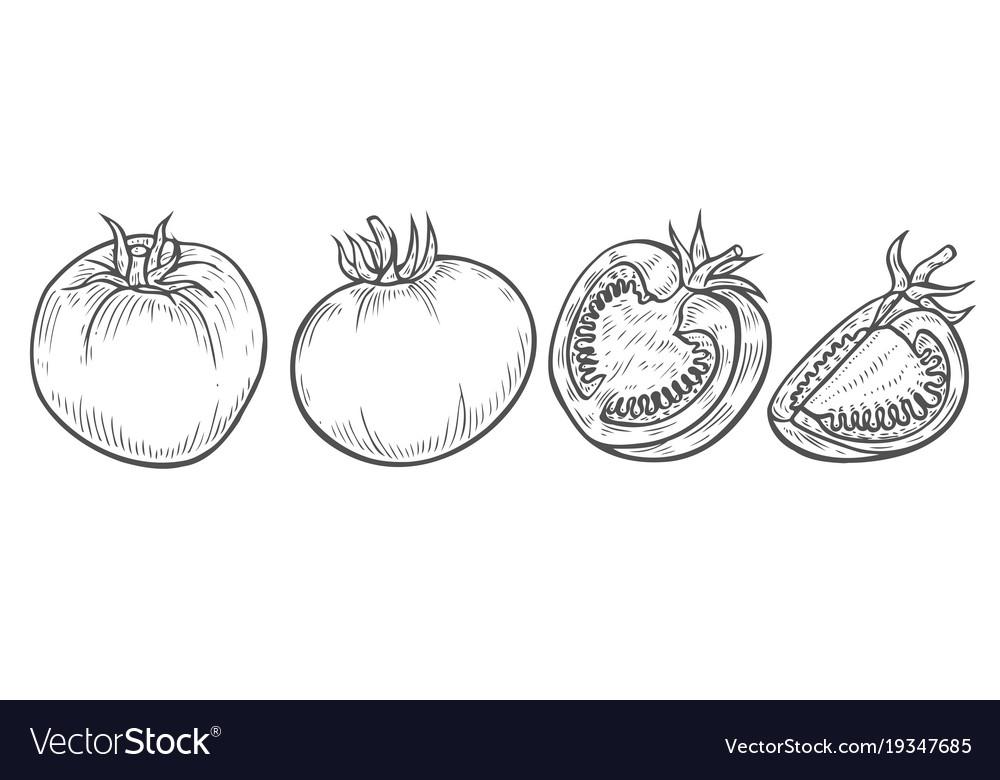 Tomato slice set vector image