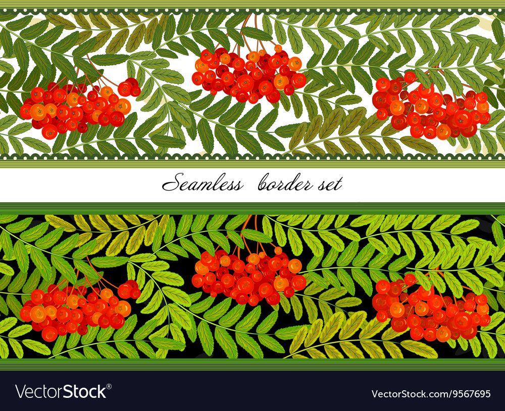Border of bunches rowan and leaves Seamless