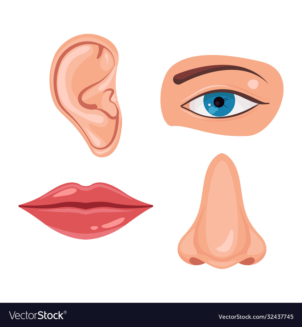 Human face parts or sensory organs set nose ear