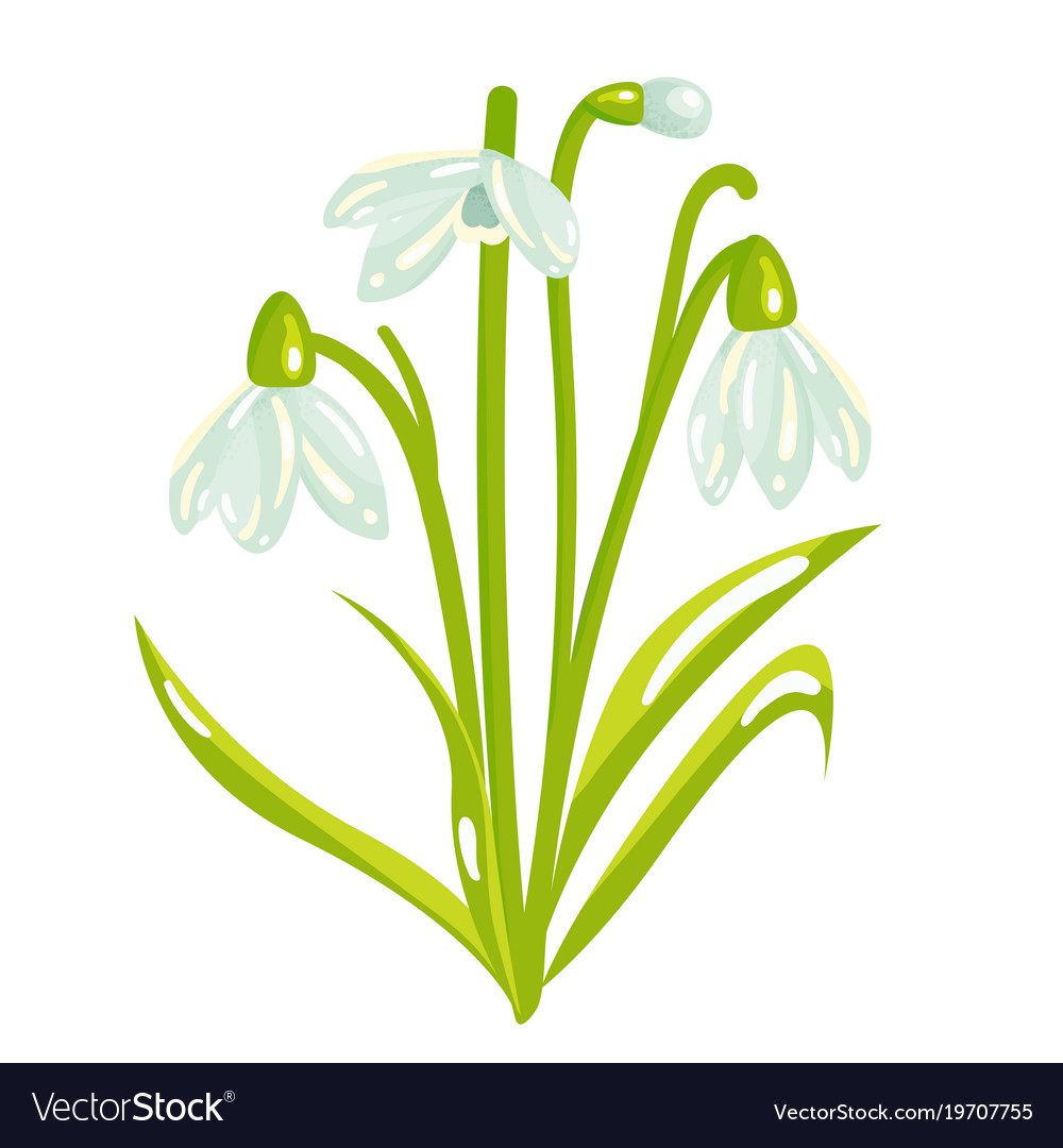 Cartoon snowdrop spring flower vector image