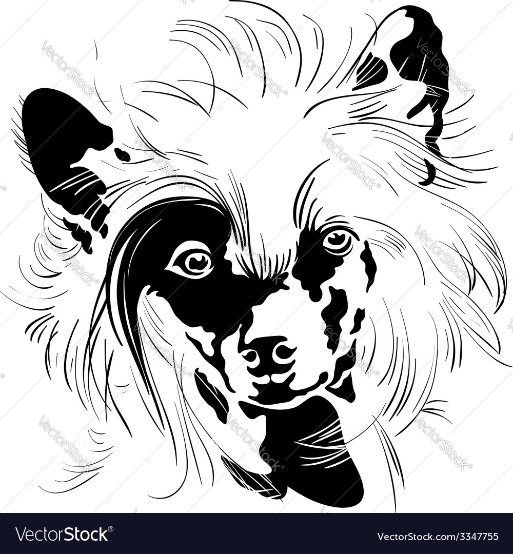 Sweet dog Chinese Crested breed hand drawing
