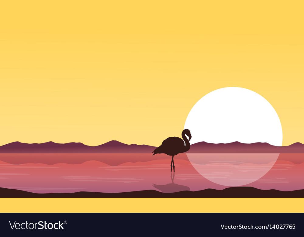 Silhouette flamingo on lake at sunset scenery