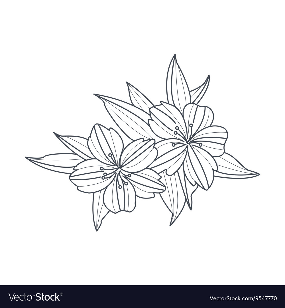 Wild Flower Monochrome Drawing For Coloring Book