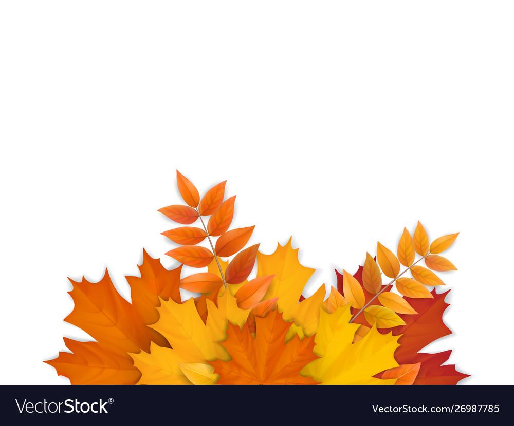Bouquet fallen autumn leaves