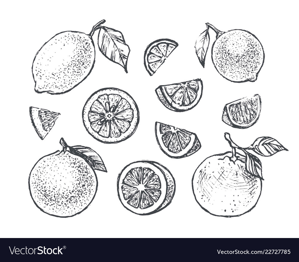Citrus icons set with lemon orange and lime