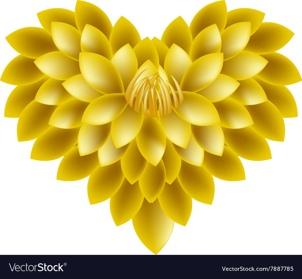 Yellow dahlia flowers in a heart shape royalty free vector yellow dahlia flowers in a heart shape vector image izmirmasajfo