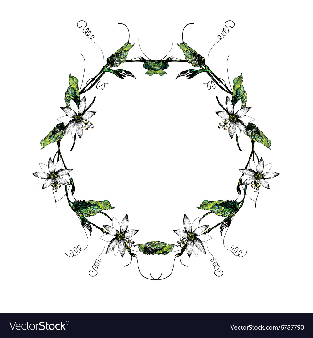 Passiflora white wreath2 vector image