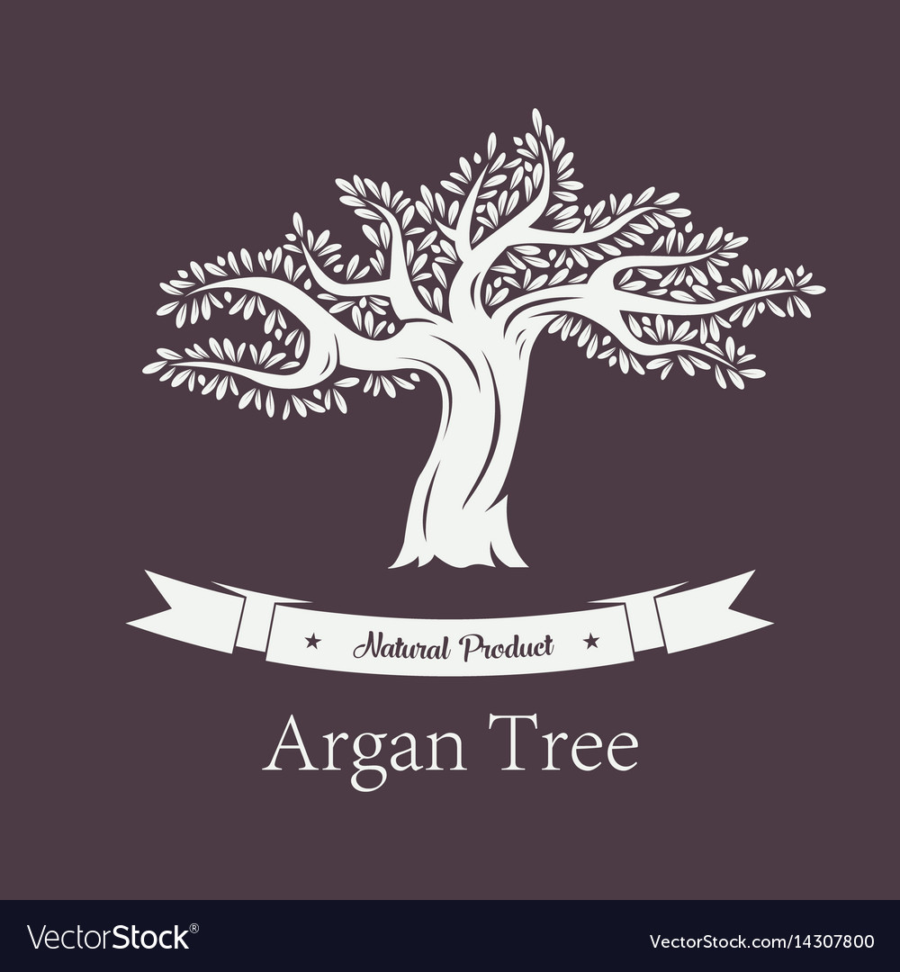 Argania plant or argan tree with foliage vector image