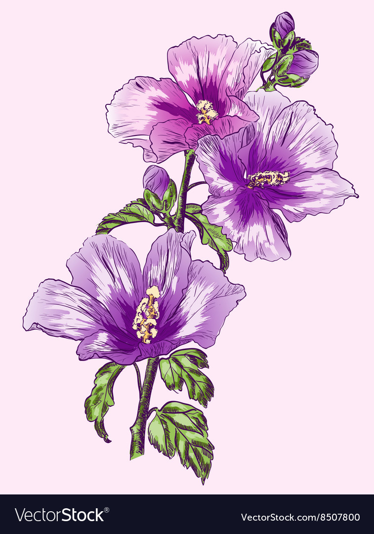 Purple Hibiscus Flower Sketch Royalty Free Vector Image