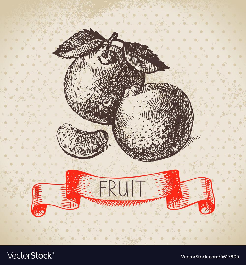 Hand drawn sketch fruit mandarin Eco food vector image