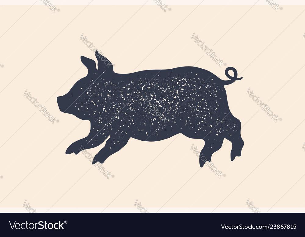 Pig piggy concept design of farm animals