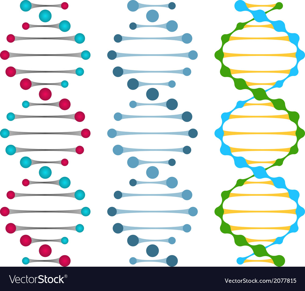 Three variants of double strand DNA molecules