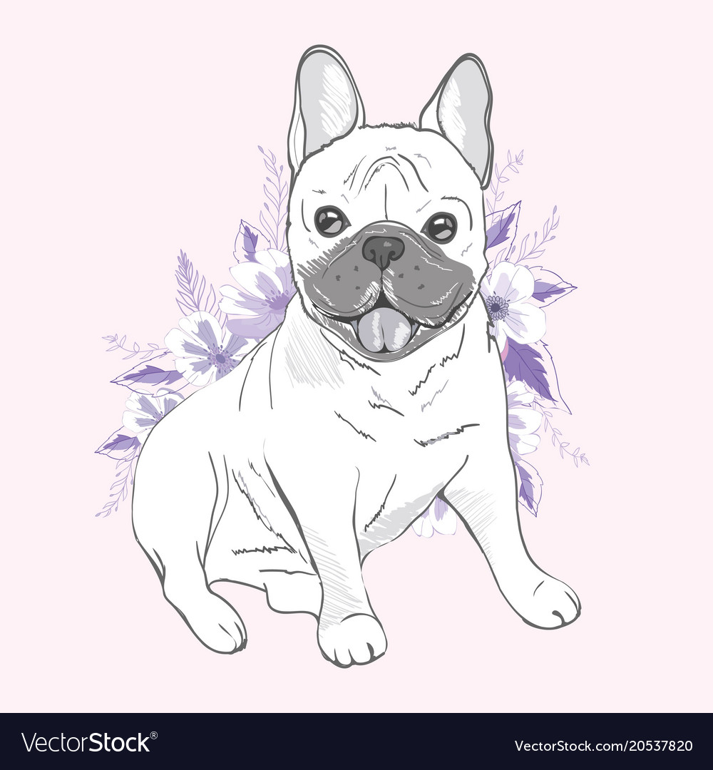 French bulldog sitting in front of white